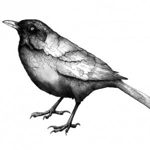 Day of the Organic Blackbirds: Turdus Merula