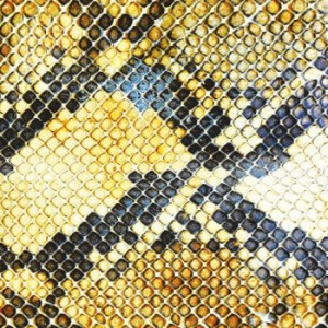The Amazing Snakeheads: Amphetamine Ballads