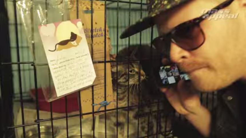 Se rappare hålla i katt-casting
