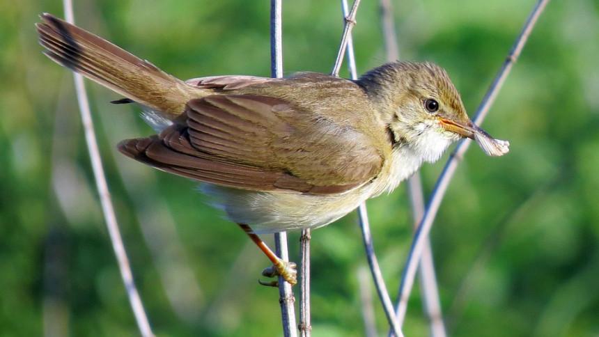 Fåglar brädar storstjärnor – tar sig in på brittiska topplistan