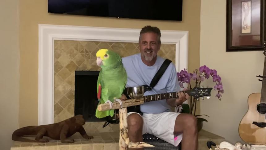 Musikalisk papegoja sjunger med i Led Zeppelin, Van Halen och Guns N' Roses – gör ingen besviken